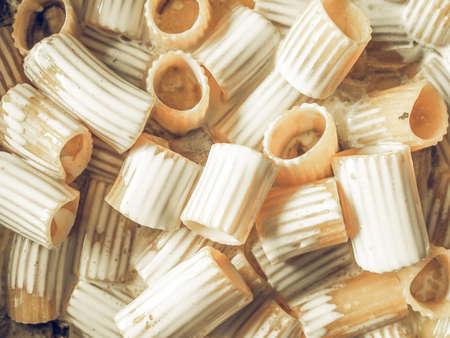 desaturated: Vintage desaturated Paccheri traditional Italian pasta food  with cream