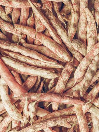 roman beans: Vintage desaturated Cranberry variety of common beans aka Crimson bean or Borlotti bean or Roman bean Stock Photo