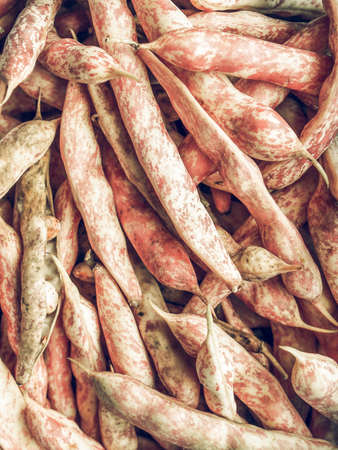 borlotti beans: Vintage desaturated Cranberry variety of common beans aka Crimson bean or Borlotti bean or Roman bean Stock Photo