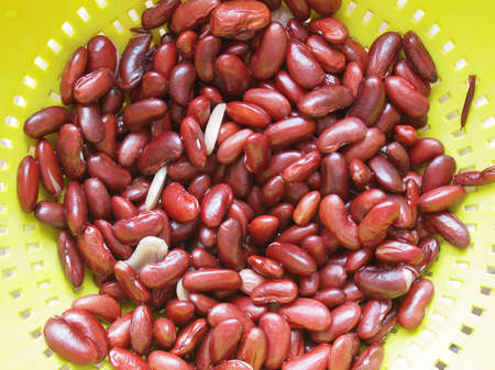 Kidney beans variety of common bean (Phaseolus vulgaris) legumes vegetables vegetarian food in a colander