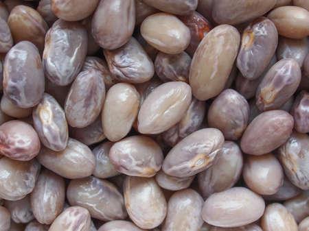 borlotti beans: Crimson beans variety of common bean (Phaseolus vulgaris) aka borlotti beans or cranberry beans legumes vegetables vegetarian food