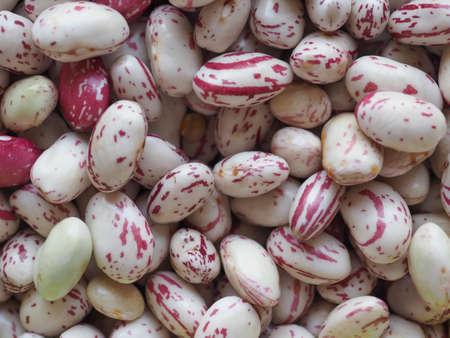 Crimson beans variety of common bean (Phaseolus vulgaris) aka borlotti beans or cranberry beans legumes vegetables vegetarian food background Stock Photo