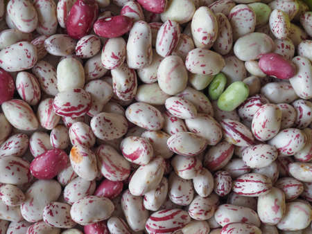 borlotti beans: Crimson beans variety of common bean (Phaseolus vulgaris) aka borlotti beans or cranberry beans legumes vegetables vegetarian food background Stock Photo