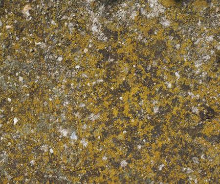 plantae: Green Moss (Plantae Bryophyta) on a rock