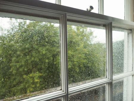 rain wet: Wet window pane with rain water droplets and greenery background