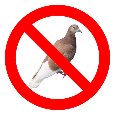 No pigeons sign, red regulatory signal over real pigeon photo
