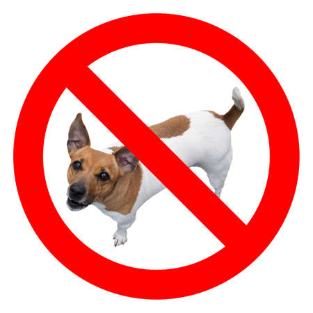 No dogs sign, red regulatory signal over real dog photo Stock Photo