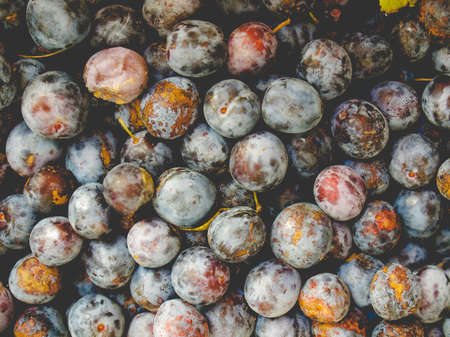 Detail of prune fruits - healthy vegetarian food - useful as a background, vintage faded look Stock Photo