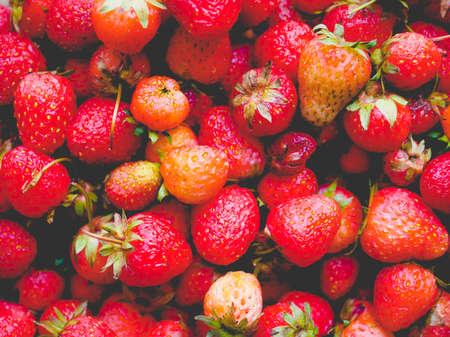Strawberry (Fragaria x ananassa) fruit vegetarian food, vintage faded look