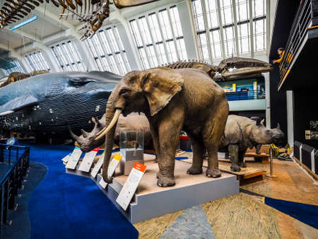LONDON, UK - CIRCA JUNE 2017: Elephant, Rhino, whale at the Natural History Museum on Exhibition Road in South Kensington (high dynamic range) Editorial