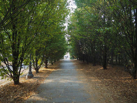 causeway tree lined parkway in Venaria, Italy Stock Photo