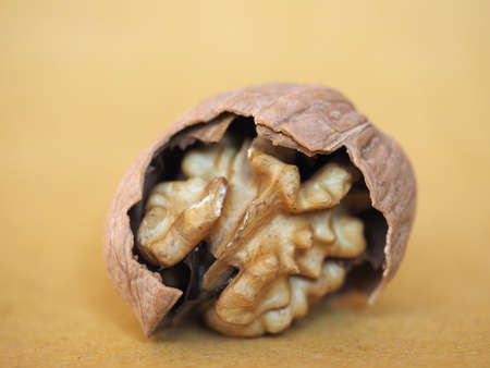 walnut food with open nut shell showing the edible fruit inside