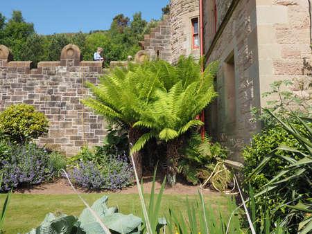 green fern (Leptosporangiate ferns) plant leaves detail