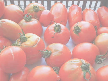 토마토 (Solanum lycopersicum) 야채 채식 및 비건 음식, 배경으로 유용한 섬세하고 부드러운 퇴색 톤 스톡 콘텐츠 - 107781161