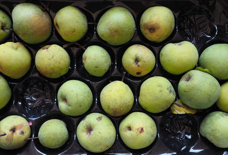 green pear vegetarian fruit food (scientific name Pyrus) 스톡 콘텐츠