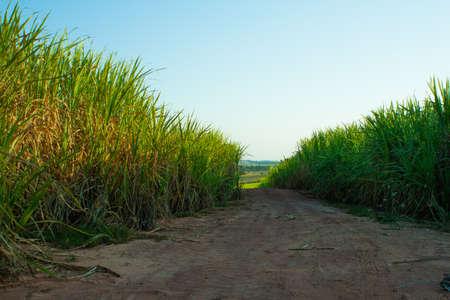 Green fields as an alternative energy