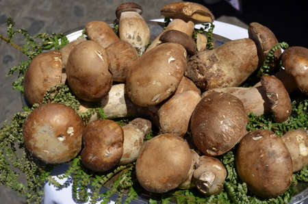 Fresh mushrooms composition  photo
