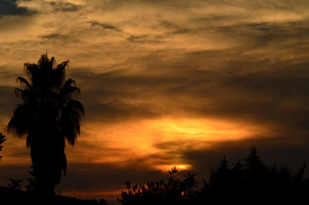 twiddle: Silhouette Palm Tree with Sunset  Stock Photo