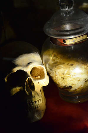 White real Skull with poison in the black background photo
