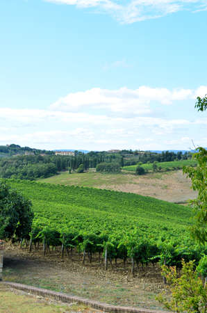 Chianti vineyard landscape in Tuscany photo