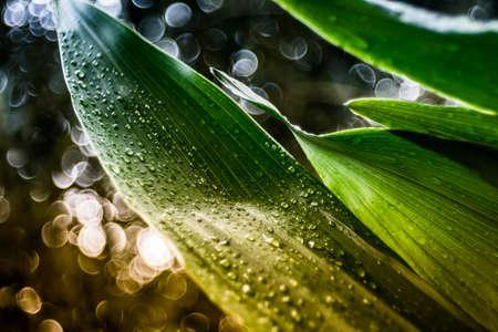 dewdrops: dewdrops