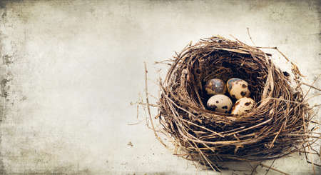 paschal: nest with eggs - texture Stock Photo