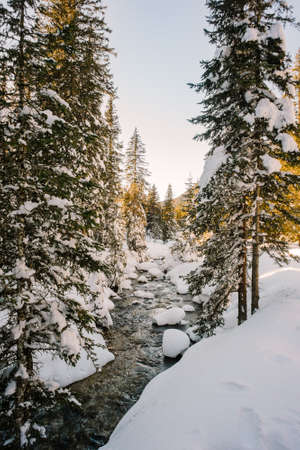 pine creek: Stream in a snowy forest Stock Photo
