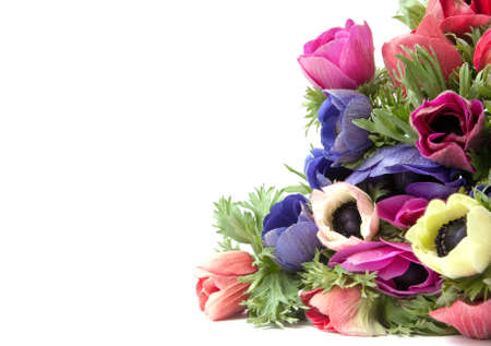 anemones: anemones on a white background