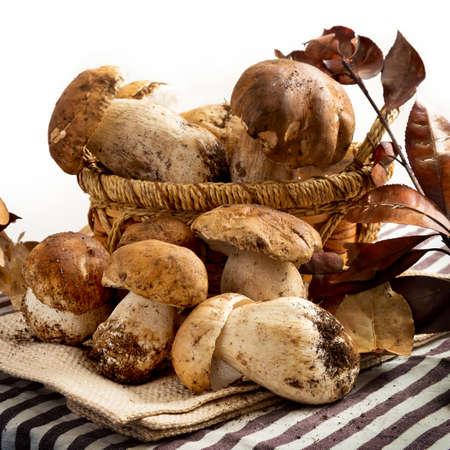 porcini: porcini mushrooms Stock Photo
