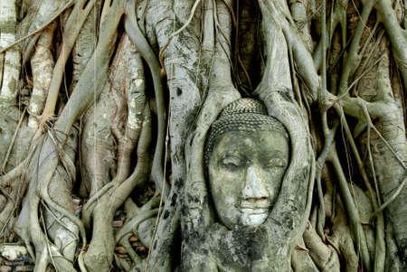 quenching: Buddha Head Ayutthaya Stock Photo
