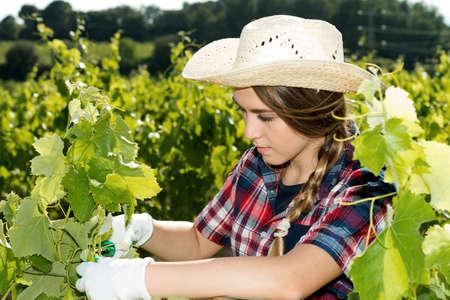 woman works in the vineyard