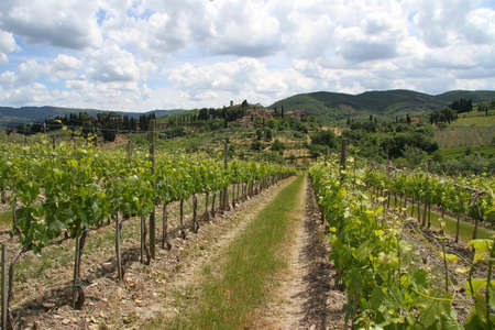 non cultivated land: vineyards in Chianti with a small town in the background