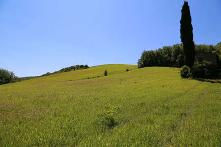 non cultivated land: Hills of Chianti
