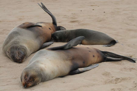 s stomach: Two seals resting on the beach