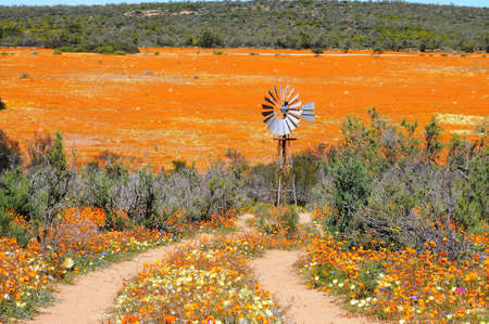 rural road in Namaqualand National Park photo