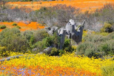 Namaqualand National Park photo