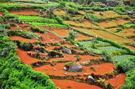 Agriculture on Terrace Fields in Central Sri Lanka photo