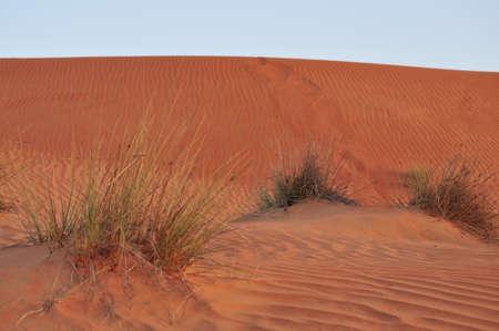 oman: Sandy desert in Oman