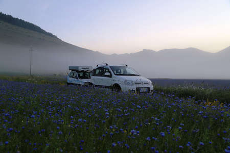 animal private: Fiat Panda in the middle of fields and flowers in Piano grande