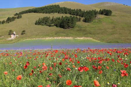 castelluccio: Landscape of Castelluccio di Norcia Stock Photo