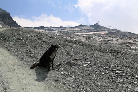 looking at viewer: dog sits on the edge of the cliff with its back turned to viewer looking down with mountain peaks in the background in Breuil-Cervinia, Italy