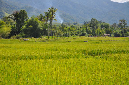panorama of traditional Indonesian landscape near Lore Lindu, Sulawesi