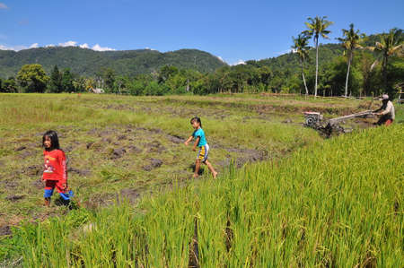 celebes: Unidentified people at the rice field at Lore Lindu