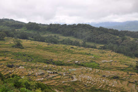 wide  wet: Rice terraces in Tana Toraja, South Sulawesi, Indonesia