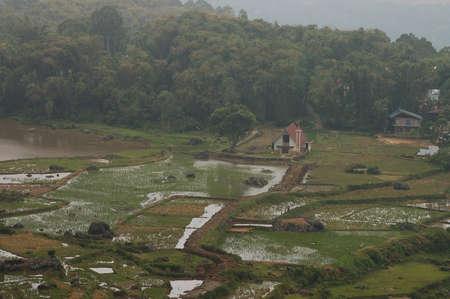 toraja: Rice terraces in Tana Toraja, South Sulawesi, Indonesia