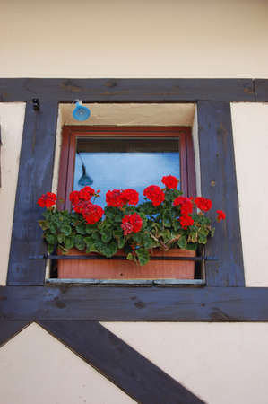 casement: red Geranium Window Box Stock Photo