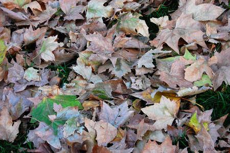 hojas secas: NTECEDENTES con hojas secas