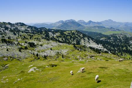 ピレネー山脈の自然公園の牧草地。