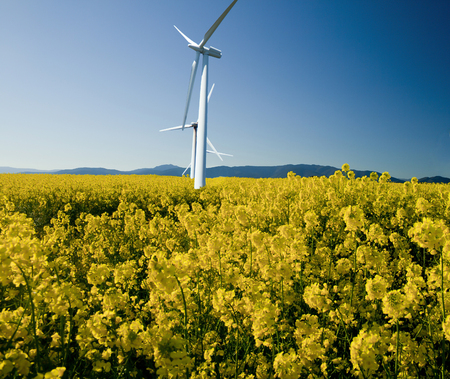 Windmills in a rape-seed field against a bright blue sky, photomontage from two photos