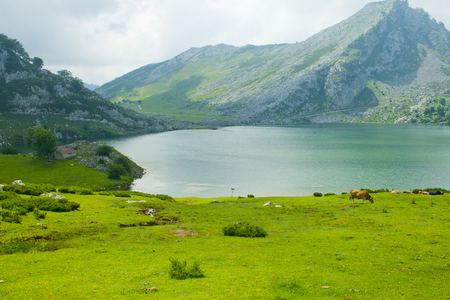 Beautiful nature of Spain: Covadonga mountain lakes in summer cloudy day.